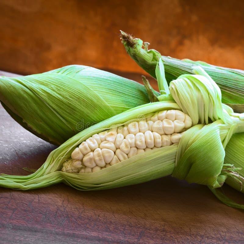 Choclo, Péruviens blancs ou maïs de Cuzco images libres de droits