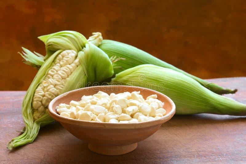 Choclo, Péruviens blancs ou maïs de Cuzco photos libres de droits