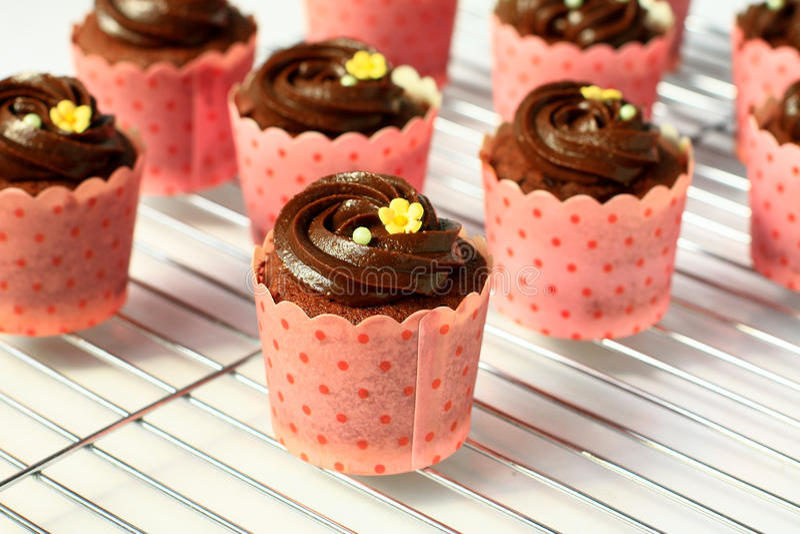Chocolade cupcakes royalty-vrije stock afbeelding