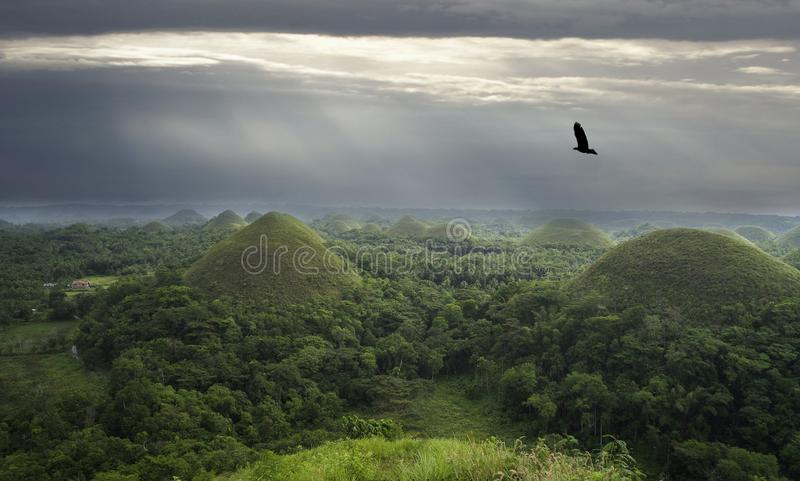 Chocoladeheuvels Bohol islend filippijnen royalty-vrije stock afbeeldingen