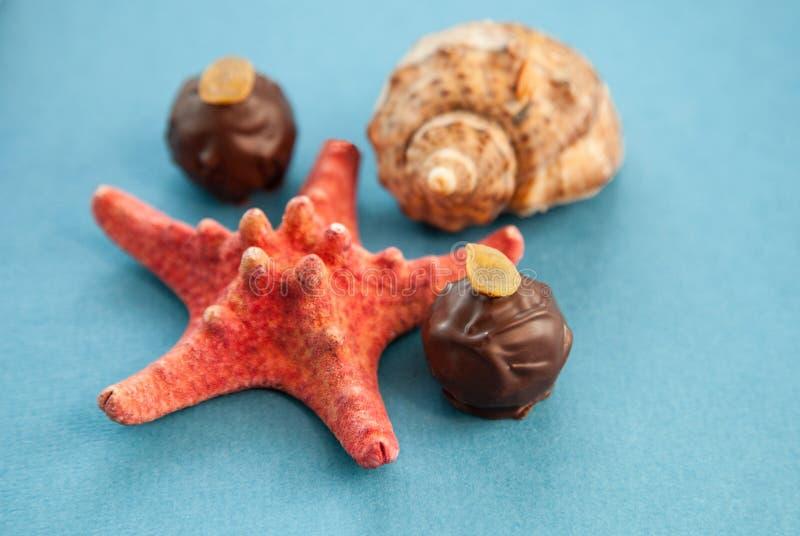 Chocoladetruffels en zeeschelpen stock afbeeldingen
