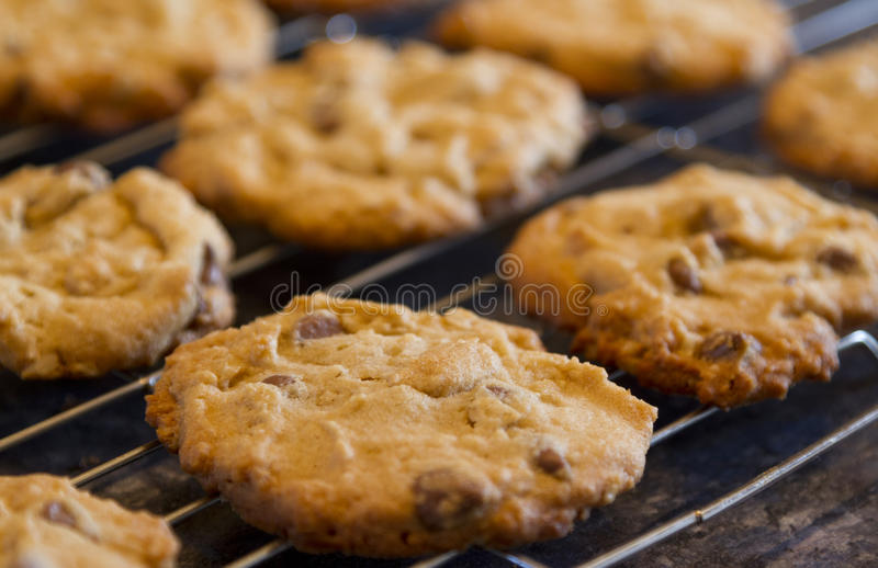 Chocolate chip cookies. Close up of homemade chocolate chip cookies cooling on a wire rack stock images