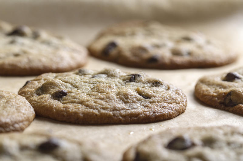 Chocolate Chip Cookies. Fresh baked chocolate chip cookies stock image