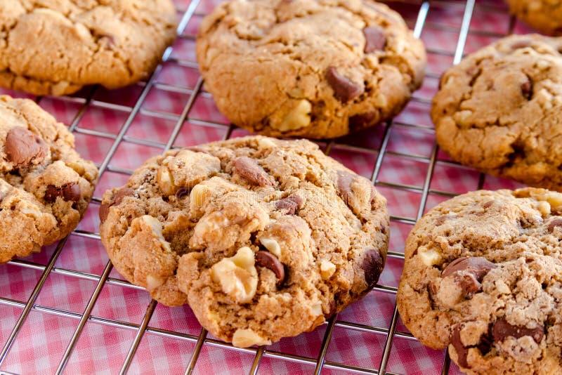 Chocolate hecho en casa Chip Cookies con las nueces foto de archivo libre de regalías