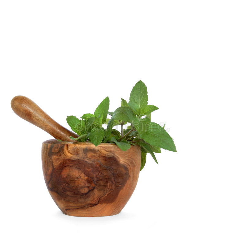 Chocolate Mint Herb Leaves Royalty Free Stock Photo