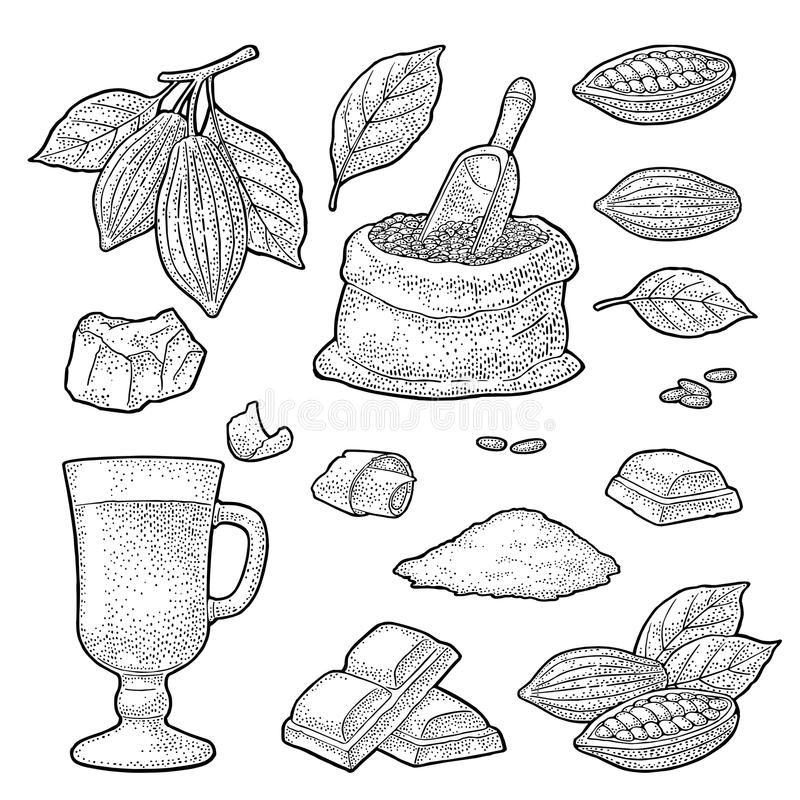Chocolate piece, bar and shave. Vector vintage black engraving. Chocolate piece, bar, shave. Fruits of cocoa with leaves and beans. Vector vintage black royalty free illustration