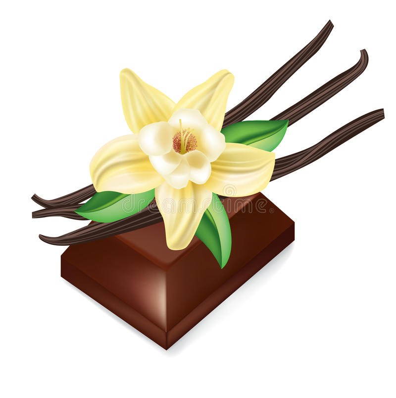 Chocolate piece and vanilla flower isolated. On white royalty free illustration