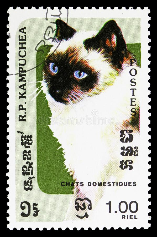 Chocolate-Point-Siam (Felis silvestris catus), Domestic Cats serie, circa 1985. MOSCOW, RUSSIA - SEPTEMBER 26, 2018: A stamp printed in Kampuchea (Cambodia) royalty free stock images