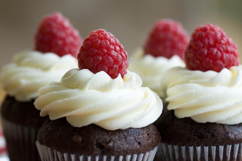 Chocolate and raspberry cupcakes stock image