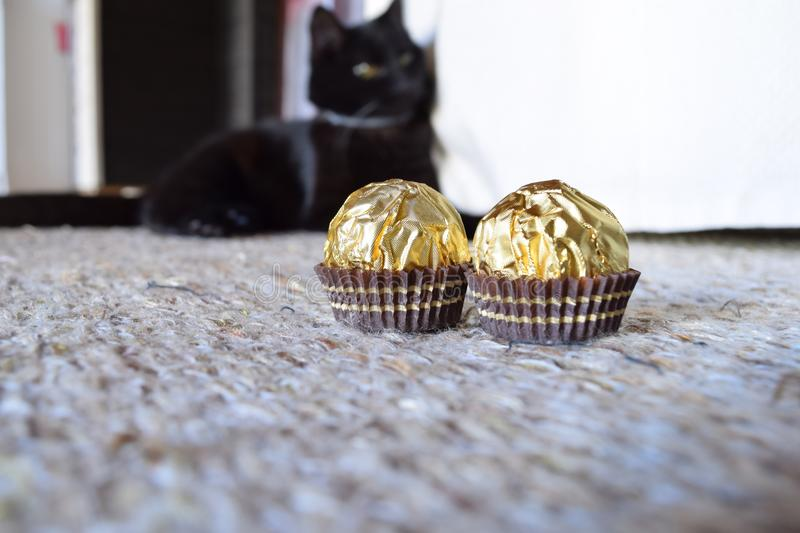 Chocolate rochers with cat waiting in the back royalty free stock photo