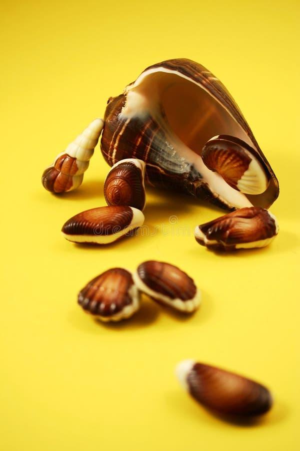 Chocolate Seashells Yellow I royalty free stock image