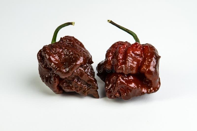 Chocolate Trinidad Moruga Scorpion Peppers foto de archivo libre de regalías