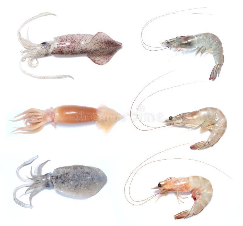Chocos do calamar do camarão do camarão foto de stock