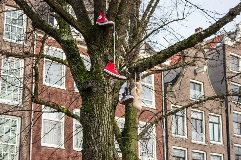 Chodaki na drzewie - Amsterdam obraz stock