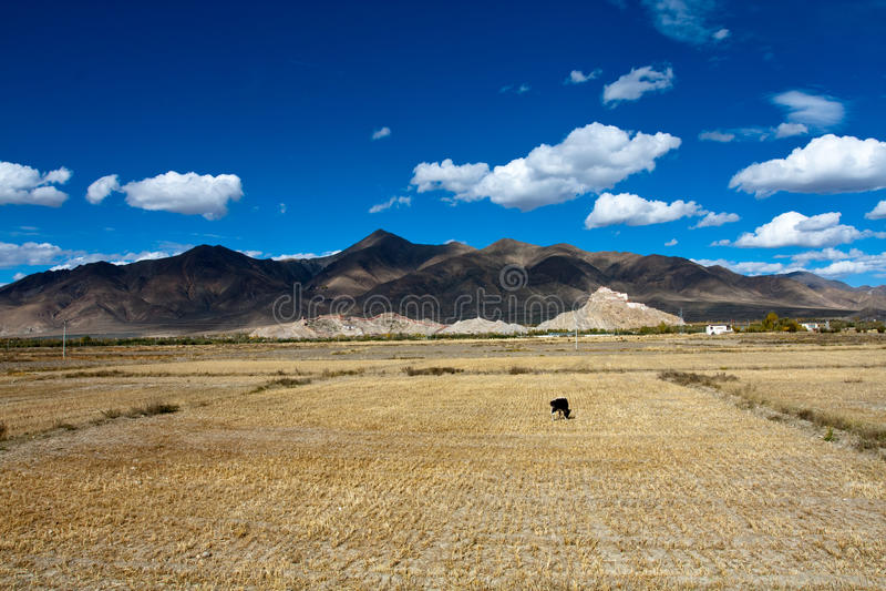 Chode de Palkor sur le Thibet photos libres de droits
