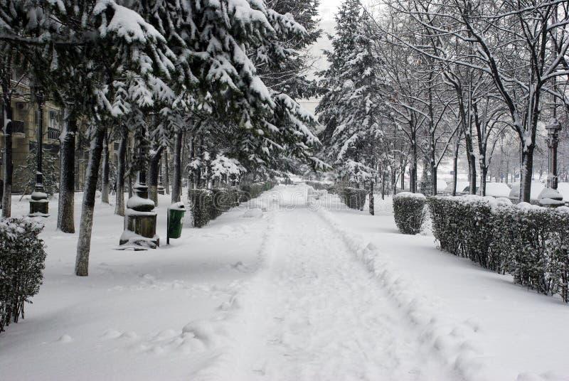 Chodniczek zakrywający z śniegiem zdjęcie royalty free