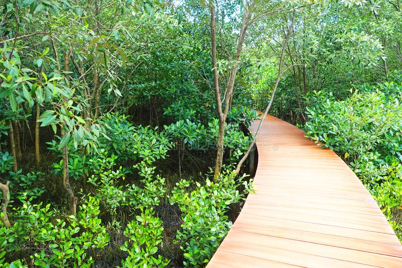 Chodnik drewniany przez las namorzynowy zlokalizowany w prowincji Chanthaburi,Tajlandia zdjęcia stock