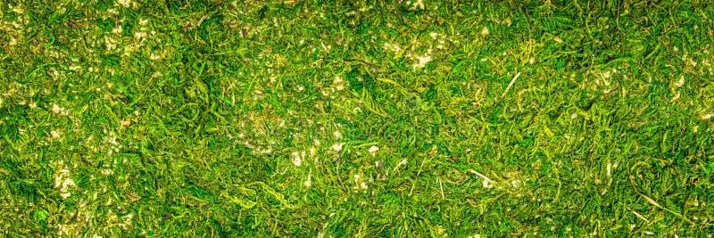 Chodnikowiec, topview mech zmielony tło, mechata lasowa podłoga obraz royalty free