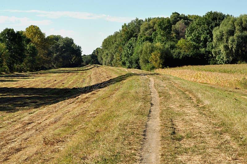 Chodząca ścieżka w kraju zdjęcia royalty free