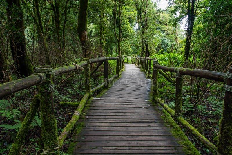 Chodząca ścieżka w lesie tropikalnym przy Doi Intanon, obraz royalty free