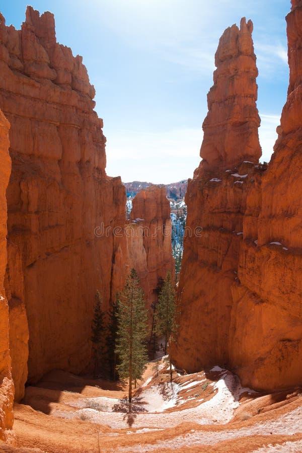 Chodzącego śladu Uroczysty schody w Bryka jaru parku narodowym, Utah, usa obrazy royalty free