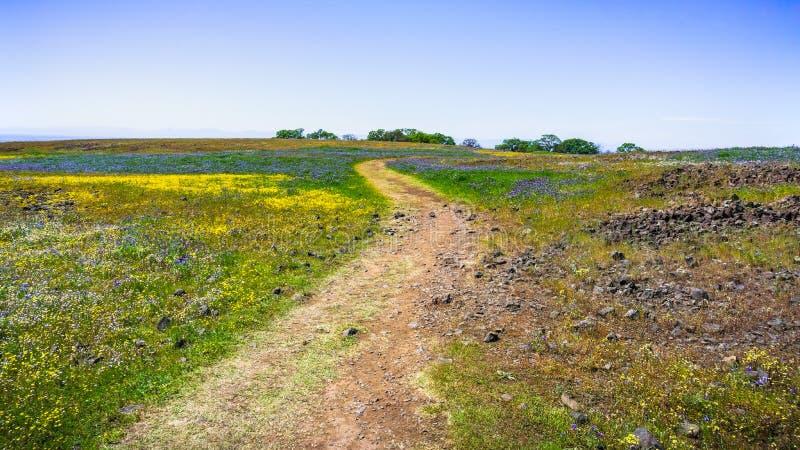 Chodzący ślad przez poly zakrywających w wildflowers, północy Stołowa Ekologiczna rezerwa, Oroville, Kalifornia zdjęcia stock
