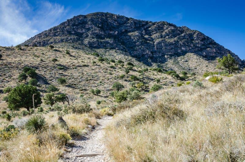 Chodzący ślad Teksas - Guadaloupe gór park narodowy - obraz stock