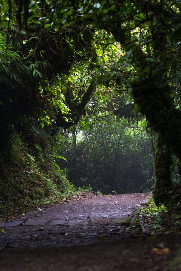 Chodzący ślad w obłocznym lesie zdjęcie stock
