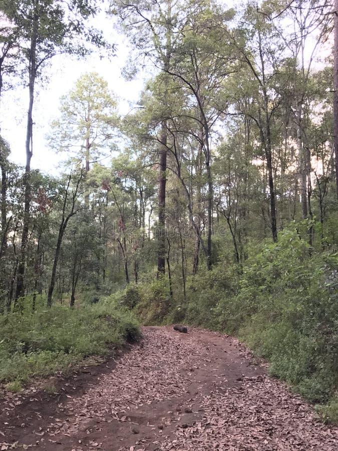 Chodzący drogę w las pełno, sposób liście obraz royalty free