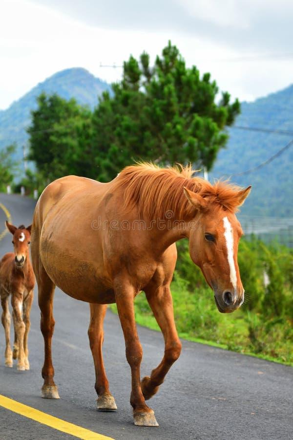 Chodzący koń na autostrady pas ruchu zdjęcie stock