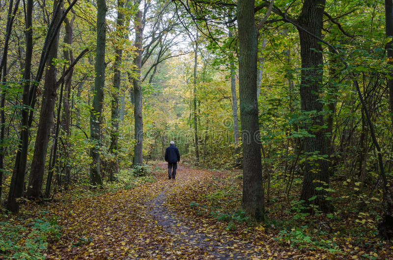 Chodzący mężczyzna przy wijącym footpath przy jesienią obraz royalty free