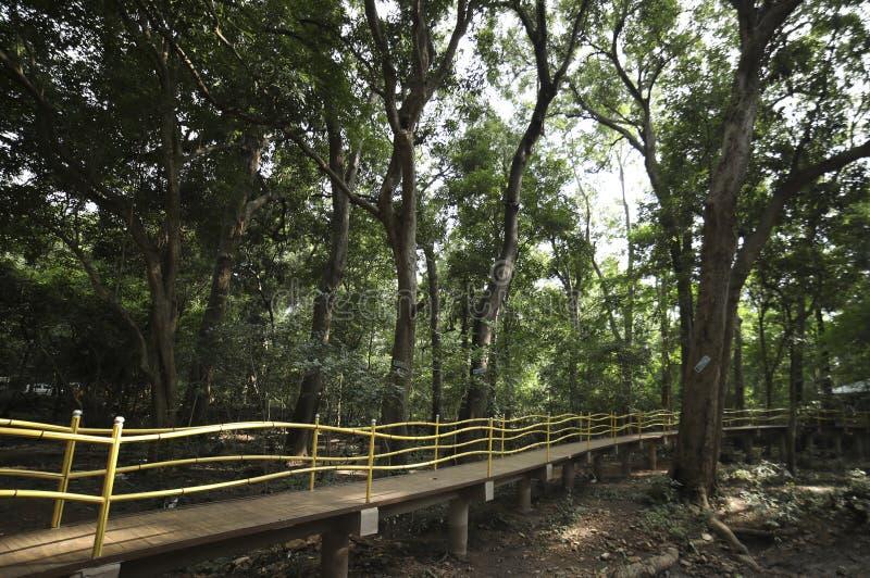 Chodzący most w lesie zdjęcia stock