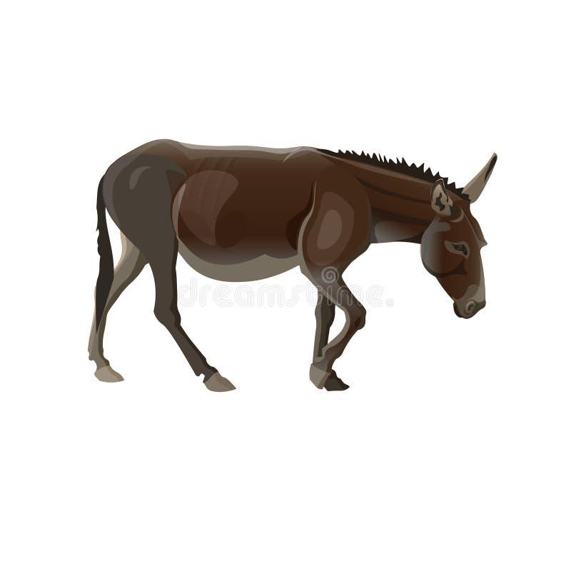 Chodzący osła wektor royalty ilustracja