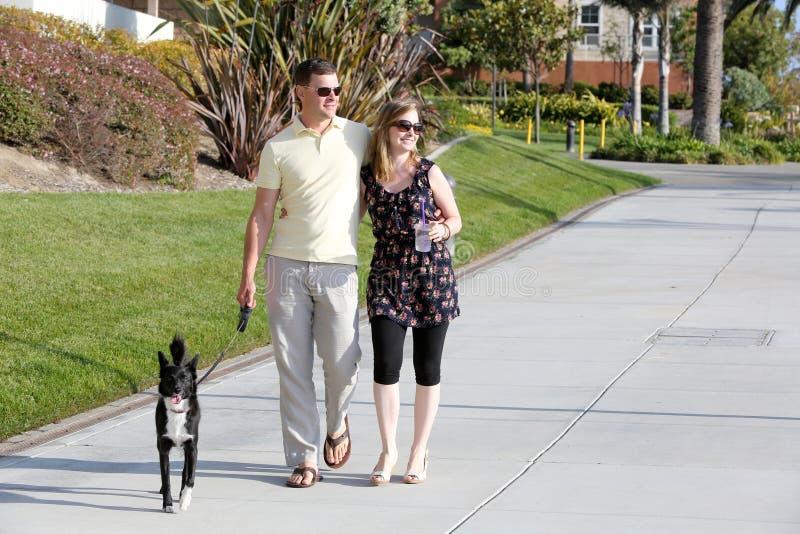 Chodzący pies zdjęcie stock