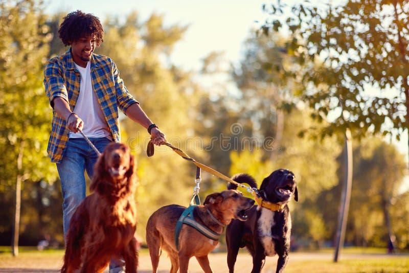 Chodzący psa - obsługuje psiego piechura cieszy się z psami zdjęcia stock