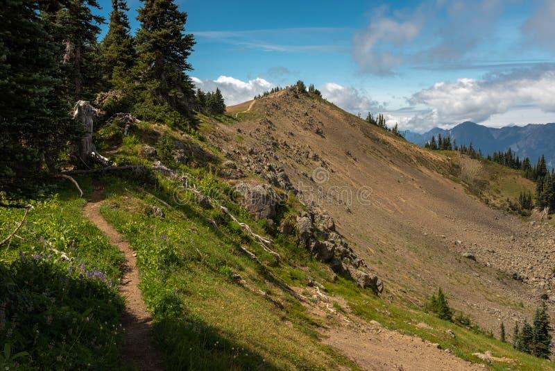 Chodzący wzdłuż wąskiej rozciągliwości Huraganowy wzgórze ślad, Olimpijski park narodowy, Waszyngton, usa zdjęcie stock