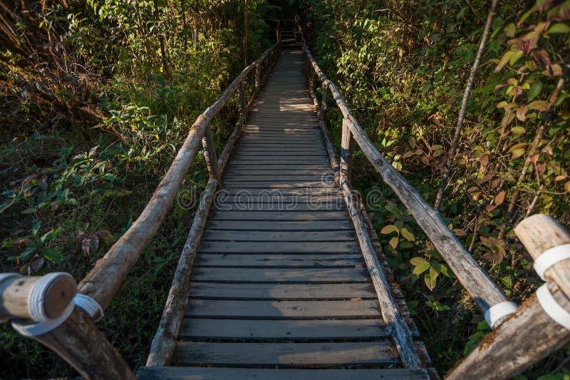 Chodz?ca ?cie?ka w lesie tropikalnym przy Doi Intanon nationalpark, Chiang Mai, Tajlandia Światło dzienne, góra zdjęcie royalty free