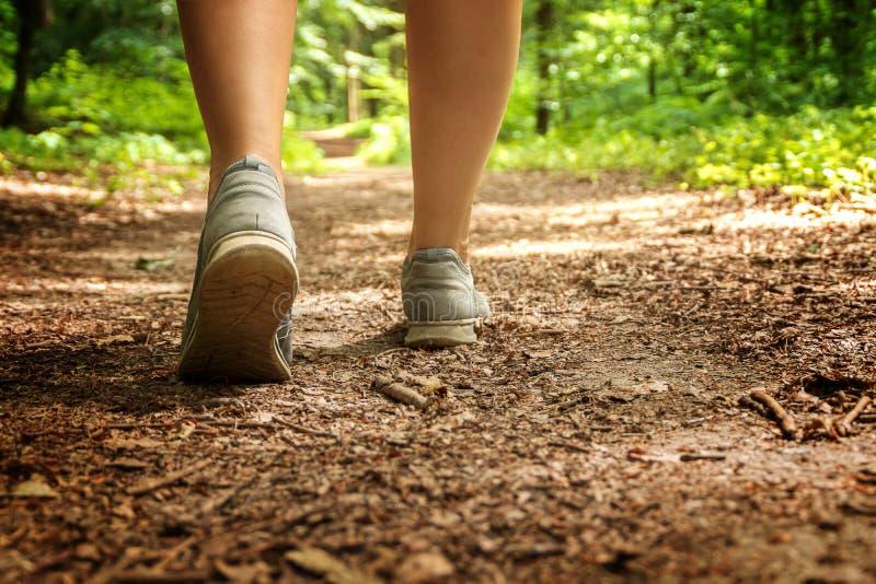 Chodzić dla lasowego kąpania obraz stock