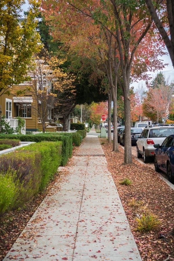 Chodzić przez mieszkaniowego sąsiedztwa na chmurnym jesień dniu; kolorowi spadać liście na ziemi; Palo Alto, San Francisco fotografia royalty free