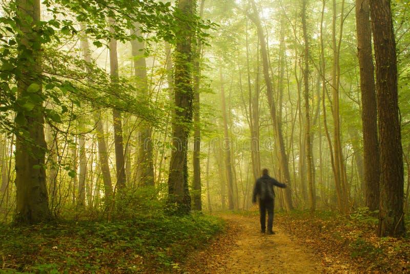 Chodzić w lesie obrazy royalty free