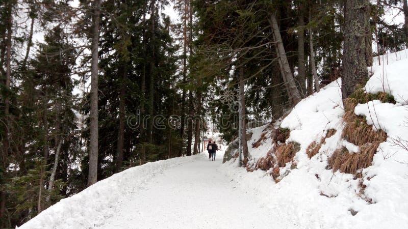 Chodzić W zimy krainie cudów fotografia stock