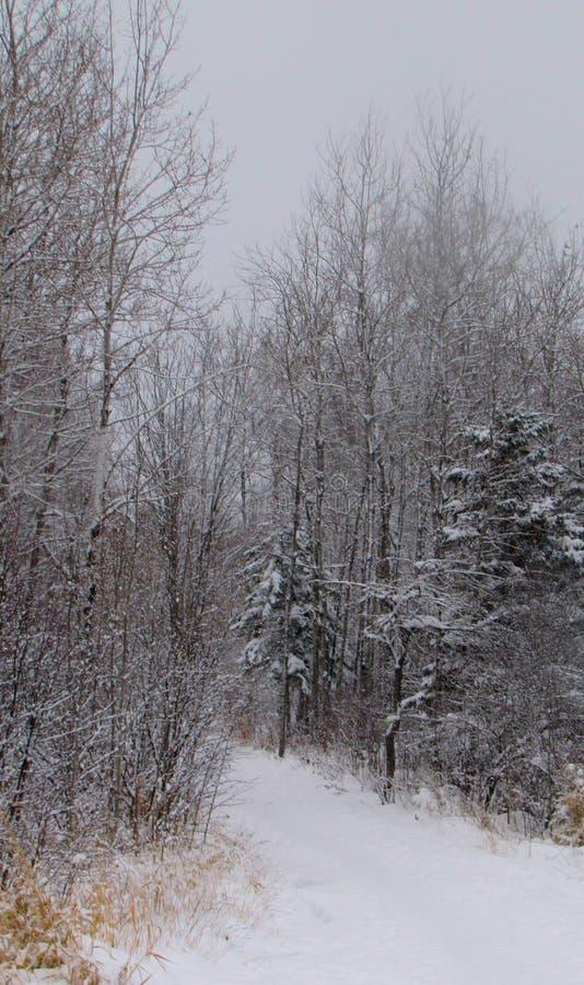 Chodzić zima ślad obraz royalty free