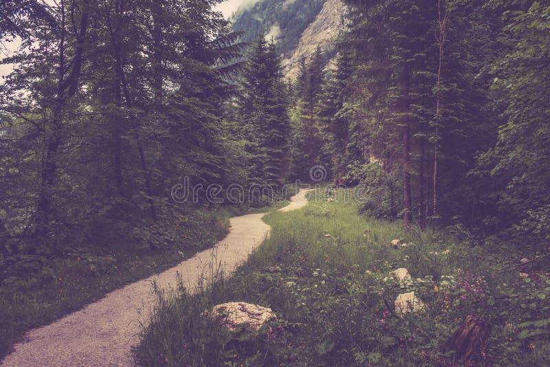 Chodzi w głębokim lesie Hallstatt, Austria, Europa zdjęcie stock
