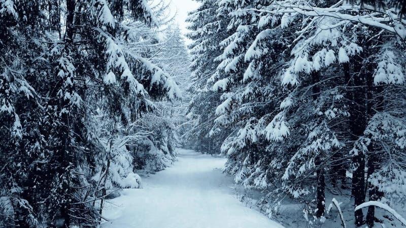 Chodzi wzdłuż pięknej zimy lasowy patway w spada śniegu obrazy stock