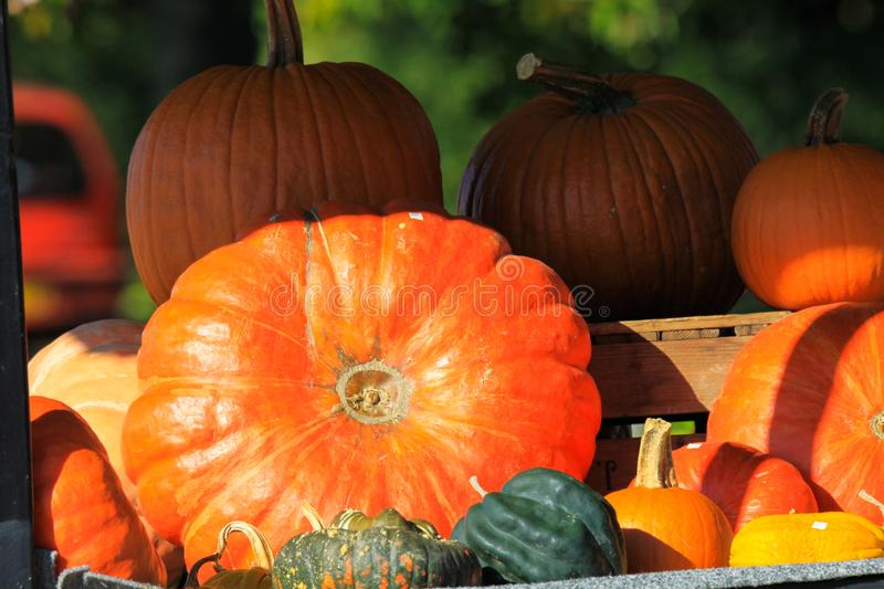 Choice of yellow and red pumpkins in different sizes and shapes decorated on a cart in bright autumn light - Netherlands royalty free stock image