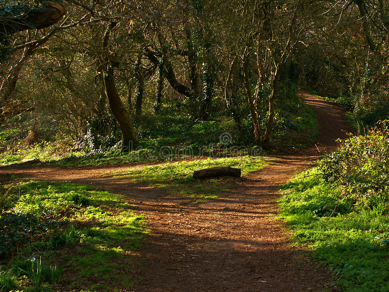 Download Choices stock image. Image of enchantment, path, branch, outdoors - 8231