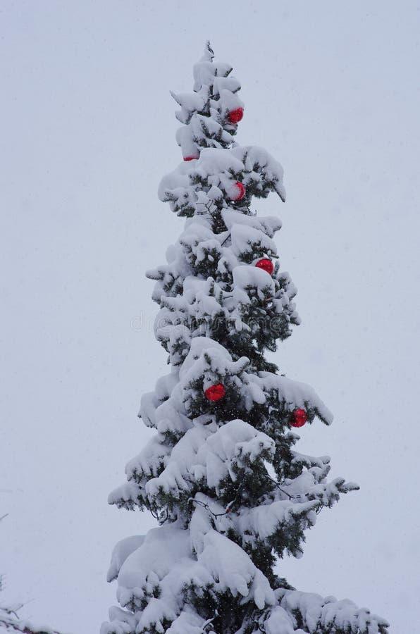 Choinka śnieg fotografia stock