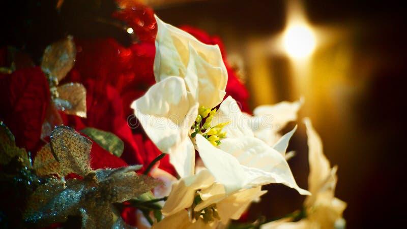 Choinka ornamentów sezonu powitania obrazy stock