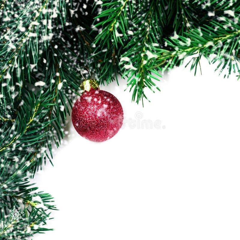 Choinka rozgałęzia się z czerwonym bauble i płatkami śniegu odizolowywającymi fotografia stock