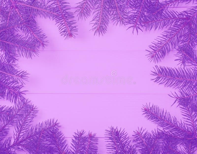 Choinki rama rozgałęzia się na drewniane purpury tonującym zamazującym tle z kopii przestrzenią Horyzontalny szablon dla projekta zdjęcia royalty free